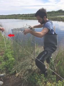 relevé des nasses près de l'étang